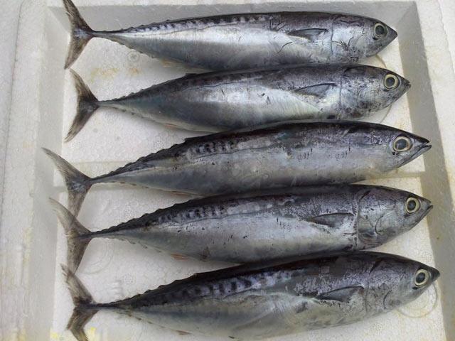Vitamin B12 có trong thực phẩm nào? - cá ngừ