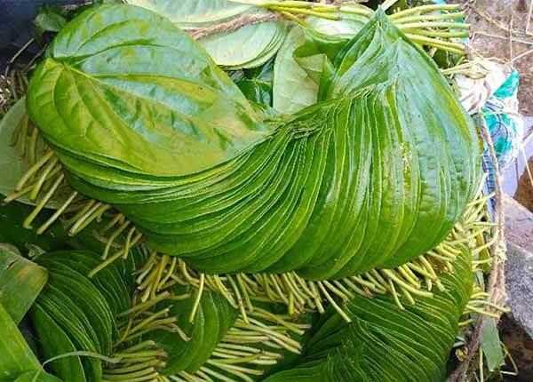 Cách chữa thủy đậu bằng thảo dược thiên nhiên