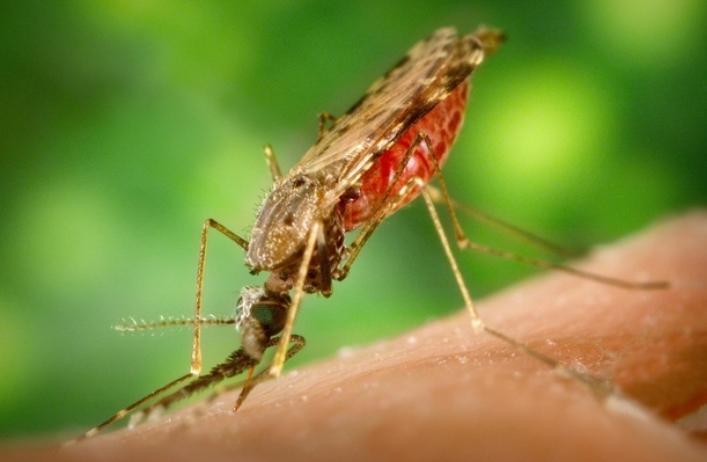 Bệnh sốt rét là gì?